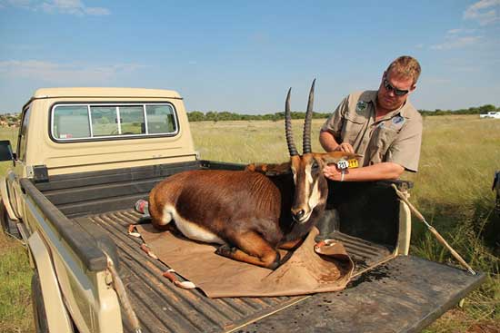 wildlife-trading-services-small-trucks-and-trailors