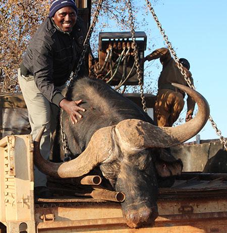 wildlife-trading-fees-namibia-permit-application