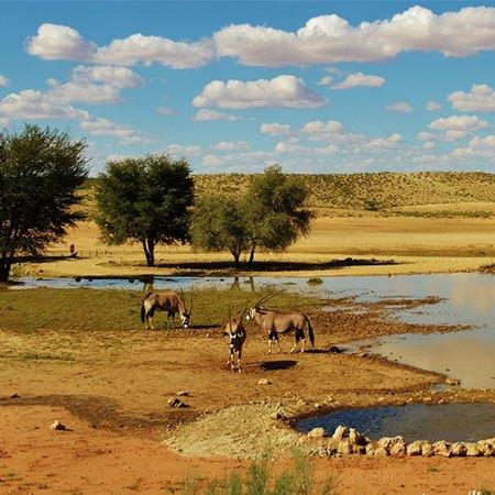 kalaharitradingcompany.com Kalahari Trading Company LLC - …